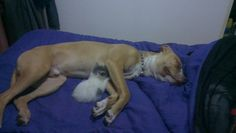 Zeus and the cat