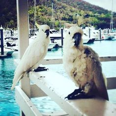 #HIRememberWhen #HamiltonIsland  wish i was still there . #best #peaceful #beautiful #place on #earth #australia #competition http://blog.fmcarsrl.com/wp-content/uploads/2016/11/14473996_1831233760423622_6885533879222927360_n.jpg http://blog.fmcarsrl.com/index.php/2016/11/17/hirememberwhen-hamiltonisland-wish-i-was-still-there-best-peaceful-beautiful-place-on-earth-australia-competition-2/