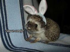 ¡Soy un conejo!