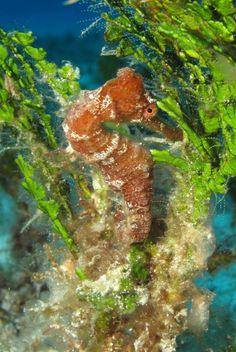 Cozumel scuba dive on Tormentos Reef.  FAST FLOAT