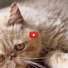 Narration of what goes on inside a cat's head all day. Laughed SO hard!