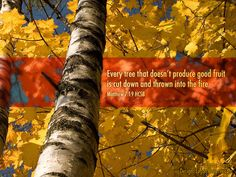 Every Tree