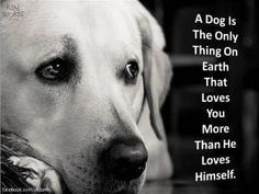 So true...Love my puppies! Puppy Love, I Love Dogs, Cute Dogs, Funny Dogs, Cute Puppies, Mans Best Friend, Best Friends, Loyal Friends, Friends Forever