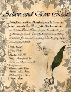 Book of Shadows: Herb Grimoire - Adam and Eve Root by CoNiGMa on DeviantArt Magic Herbs, Herbal Magic, Wiccan Spells, Witchcraft, Witch Herbs, Demonology, Practical Magic, Adam And Eve, Medicinal Herbs