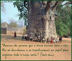 baoba poema