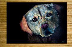 Labradorinnoutajan kuva. Tekniikka: värikynät mustalle paperille. A4.