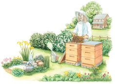 A honey bee hive can provide an abundance of honey and beeswax, increased pollination for your garden crops, and hours of entertainment. This roundup of basic beekeeping tells you what to expect when diving into the art of apiary management, including the time, equipment and budget. From MOTHER EARTH NEWS