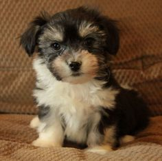 This is my little dog when he was little. 😱