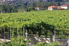 Routes of Vinho Verde, Melgaço, Minho