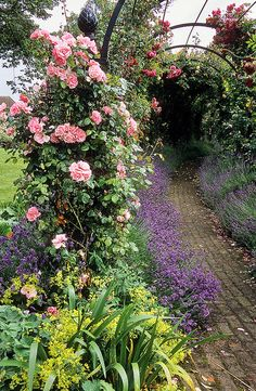 'The Gardens of the Rose', Hertfordshire, England