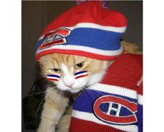 Les animaux fans des Canadiens de Montréal
