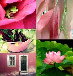 Pink & Green [Friday Flickr Photo Collage] | Flickr - Photo Sharing!