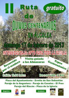 Ruta de Olivos Centenarios. Rumor Alpujarra Almería.
