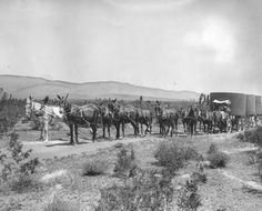 ca. 1910 - Mule team hauling materials to build the Los Angeles Aqueduct. The roadless territory spanned by the $24,500,000 water system was too tough for the automotive travel of that era.     Courtesy: Los Angeles, Water and Power Associates, Inc. Whittier, CA (USA)