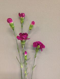 Lilla greinnellik Glass Vase, Rose, Plants, Home Decor, Pictures, Homemade Home Decor, Pink, Roses, Flora