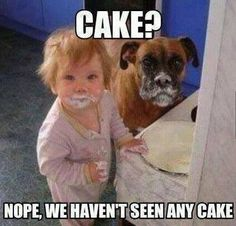 Cake - funny baby and dog meme - http://jokideo.com/cake-funny-baby-and-dog-meme/