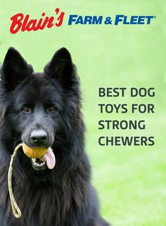 If your dog is a strong chewer, check out some of these heavy-duty toys, available at Farm & Fleet.