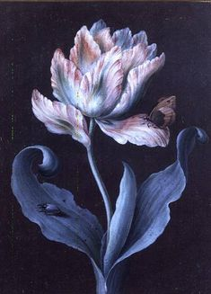 Parrot Tulip with Butterfly and Beetle by Barbara Regina Dietzsch (Germany, 1706–1783)