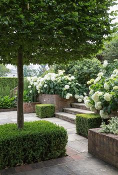 garden design - white from the Hydrangea Annabelle Boxpleached hornbeam do a job of screening a tennis court and spa from each other, whilst the overflowing beds create privacy in this sunken spot jothompsongardendesign gardendesign gardendesignlondon uk Garden Design London, Small Garden Design, Garden Landscape Design, House Landscape, Back Gardens, Small Gardens, Outdoor Gardens, Sunken Garden, Garden Pool