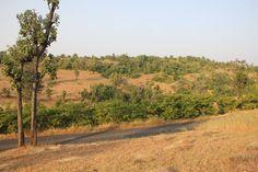 Enjoy the Greenness around #Darbargadh Kadval Heritage.