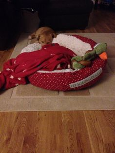 New bed from Santa - he likes it now, was a bit unsure at first