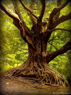 Cool tree at Balarny Castle by Shaleesa, via Flickr