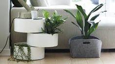 Bilderesultat for gåsefotsyngonium Decor, Furniture, Interior, Green, Side Table, Pot, Green Plants, Table, Home Decor