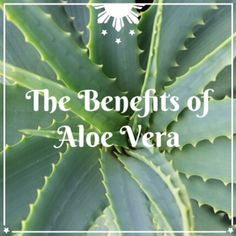 If any of you have read my whole Healing Journey, you'll know that aloe vera was a huge part of my healing. I had just started getting into natural health and I was using aloe vera along wit…