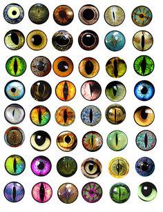 animals eyes 1x1 inch circles digital by DigitalGraphicsShop