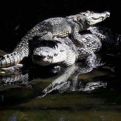 ALUXES ECOPARQUE — #animalesdemexico #palenque #aluxesecoparque...