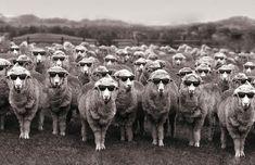 wool is cool - Szukaj w Google
