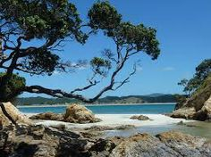 new zealand beach - Google Search