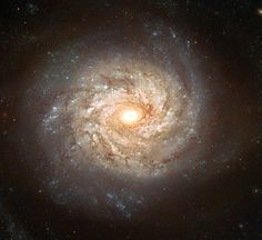 Spiral galaxy NGC 3982 displays numerous spiral arms filled with bright stars , blue star clusters and dark dust lane . It spans about 30000 light years , lies about 68 million light years from Earth and can be seen with a small telescope in the constellation of Ursa major