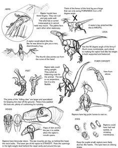Raptor Tutorial by Droemar.deviantart.com on @deviantART