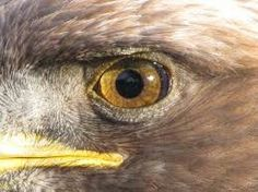 A bird's eye view is quite amazing as pretty much all birds are tetrachromatic and can see Red, Green, Blue and UV. They have 20/5 vision on average. The Bald Eagle has a sight of 20/4 vision meaning it could see an ant crawling on a 10 storied building.