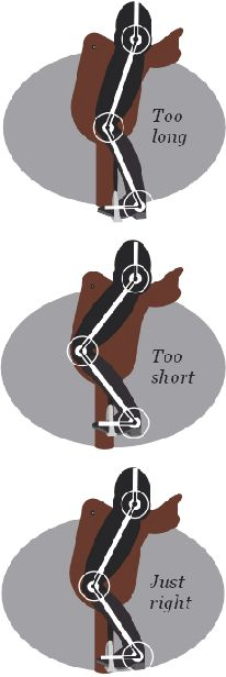 Horse Rider's Mechanic article Stirrup length think I've got mine just right Horse Riding Tips, Horse Tips, Western Horse Riding, Horseback Riding Tips, Dressage, Horse Information, Horse Exercises, Horse Anatomy, Horse Facts