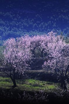 Premio a la mejor fotografía de almendros en flor a José Miguel Mengual Costa