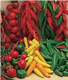 Hot Peppers, Hot Salsa Mixture (includes hungarian wax, anaheim chili, long slim red cayenne, ancho/poblano and jalapeno! Mexican Dishes, Mexican Food Recipes, Cabbage Seeds, Indoor Vegetable Gardening, Gardening Tips, Hot Salsa, Capsicum Annuum, Cucumber Seeds, Pepper Seeds