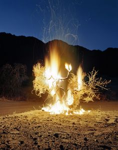 burning tree... symbol for the end, and the beginning... destruction=creation
