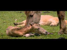 Onvoorstelbaar Nederland!  De Nieuwe Wildernis - Trailer - 26 september in de bioscoop - YouTube