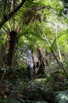 Amboro, Samaipata, Baumfarne und Amazonaszufluss