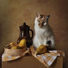 Still life. Still Life Drawing, Still Life Art, Photography Tags, Still Life Photography, Still Life Pictures, Image Chat, Beautiful Sketches, I Love Cats, Aesthetic Pictures