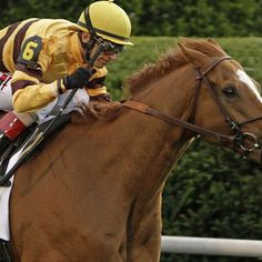 Wise Dan, the reigning two-time Horse of the Year, sustained a facture to his right foreleg and will not compete in the Nov. 1 Breeders' Cup Mile, a race he has won the past two years.