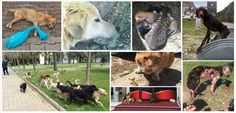 Montenegro: STOP KILLING STRAY DOGS/CATS IN BAR > http://www.thepetitionsite.com/takeaction/737/955/372/