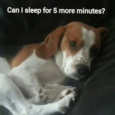 Funny Beagle - Case of the Mondays?