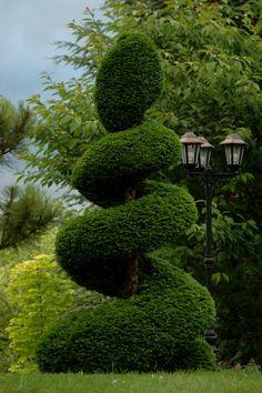 L'if est avec le buis l'arbuste idéal pour l'art de la topiaire.