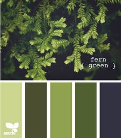 fern green design seeds hues tones shades color palette, color inspiration cards