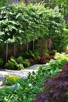 Great landscape ideas, color, texture, small landscape trees. Keep it watered in Birmingham, AL www.BlueSkyRain.com.