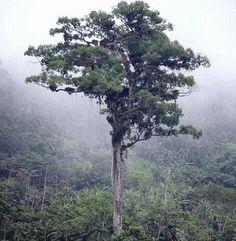 Patriarca da Floresta, Brazil, http://bit.ly/1bXYFQr
