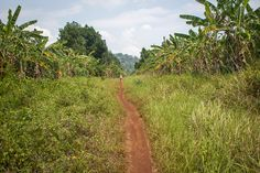 chi phat, cambodia, ecotourism, trekking in cambodia, CBET, wildlife alliance